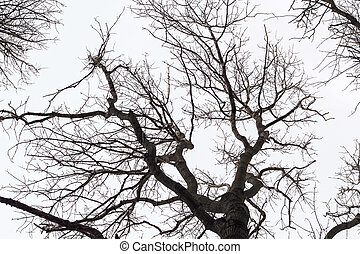 looking up through a leafless tangle of branches on a winter day