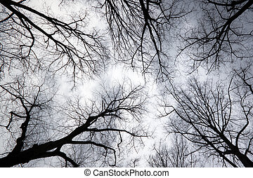 Looking up to grey sky through tree branches