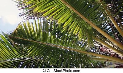 Looking up to the sky and leaves of the palm tree....