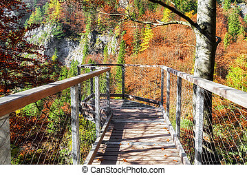 Lookout in forest - Empty lookout in autumn forest at valley...