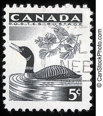 loon, frimærke, show, trykt, canada