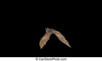 Loop animation fly bat with alpha channel HD