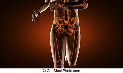 loop hip radiography scan