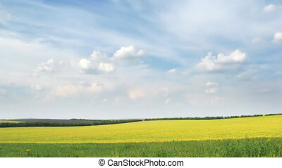 loop of white clouds moving on the blue sky over yellow rapeseed field.
