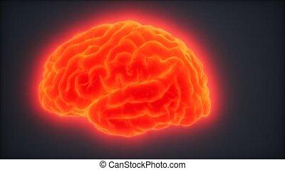 Loop Rotating Human Brain Animation