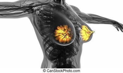loop science anatomy scan of woman mammaria glands glowing