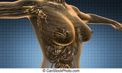 loop science anatomy scan of woman