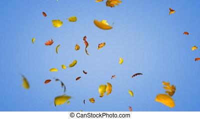 Loopable autumn leaves