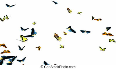 Looping Butterflies Slow Swarm Animation 1. With Alpha Mask,...
