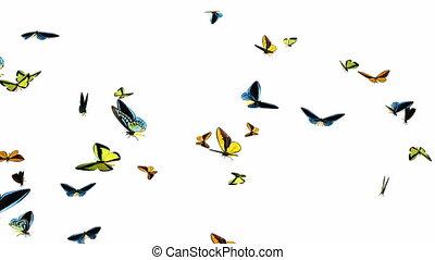 looping, vlinder, vasten, zwerm, animatie, 1
