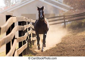 horse running - loosing horse running towards the camera