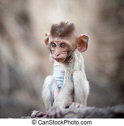 Lopburi Thailand. Monkey ( Crab-eating or Long-tailed ...