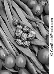 loper, cucamelons, bonen, tomaten