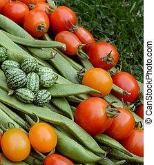 loper, cucamelons, handvol, bonen, tomaten