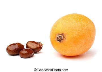 Loquat medlar and seed