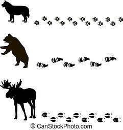 loro, piste, animali
