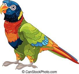 lory, papegaai