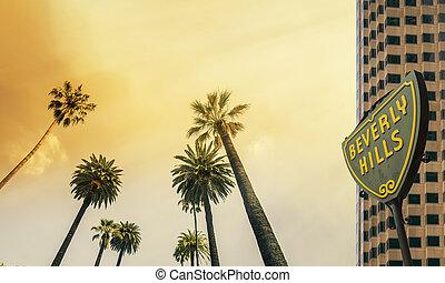los angeles , west kust, palmboom, zonneschijn