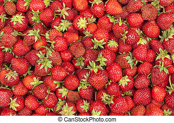 lose, erdbeer, oben, ansicht