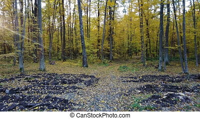 ?lose-up view of the trees in forest with yellow foliage