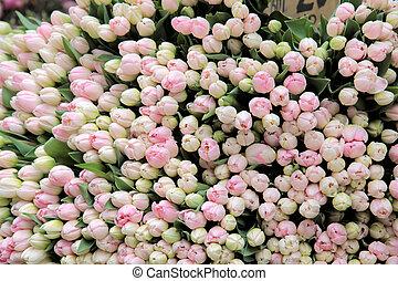lose, von, rosa, tulpen, in, a, floristik