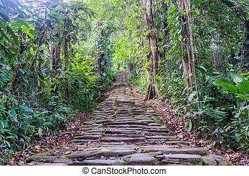 Lost City Stairs - Stone stairs in the jungle at Ciudad...