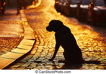 Lost dog - Silhouette of the dog on the street at sunset.