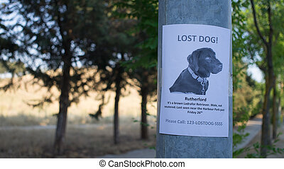 Lost dog poster - lost dog poster offering a reward