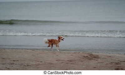 Lost Dog Running at Beach