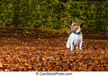 lost dog - dog run away in the park, now it is lost and can...