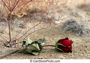 lost love - lost dry rose laying on the ground, symbolizing...