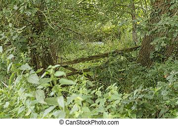Lost gate in a bog {landscape}
