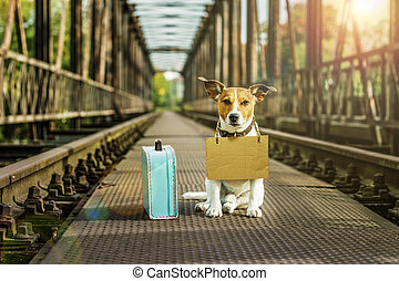 lost hond, dakloos, verlaten
