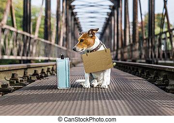 lost hond, verlaten, dakloos