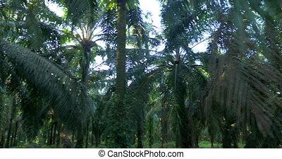 Lost In The Jungle, Costa Rica - Native 4:2:2, 10 Bit...
