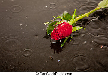 lost love and death concept - rose in puddle in road as...