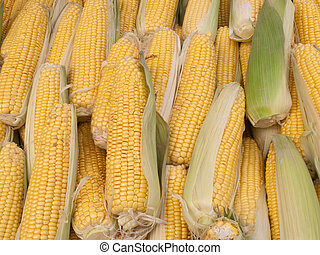 Lost of sweetcorn corn cobs close up.