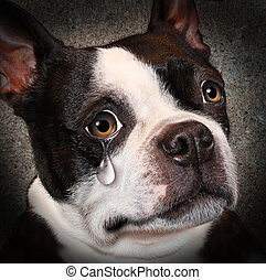 Lost pet animal cruelty and neglect concept with a sad crying dog looking at the viewer with a tear of despair as a concept of the need for humane treatment of living things.
