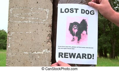 Pet owner put up lost pet sign offering a reward throughout the neighbourhood
