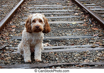 Lost puppy - A sad looking dog sitting alone on the train...