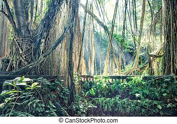 jungle  - lost town in jungle photo