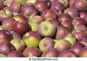 lot of apples macintosh fraichement picked background