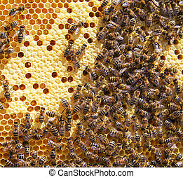 Lot of bees