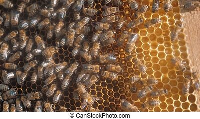 lot of bees honeycomb beekeeping background lifestyle moving...