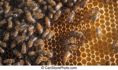lot of bees honeycomb beekeeping background moving lifestyle...