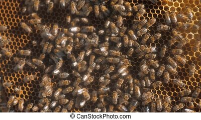 lot of bees honeycomb beekeeping background moving work...