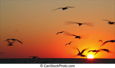 lot of birds flying against a beautiful sunset 3