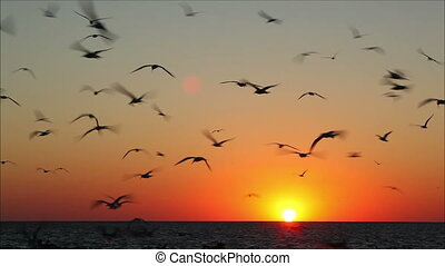 lot of birds flying against a beautiful sunset 2