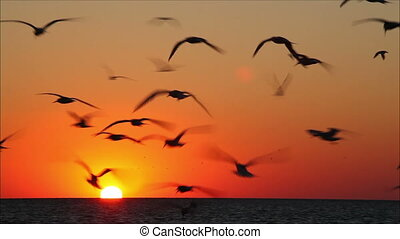 lot of birds flying against a beautiful sunset