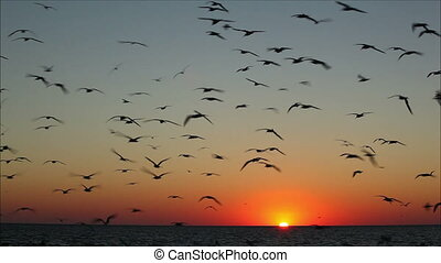 lot of birds flying against a beautiful sunset 5